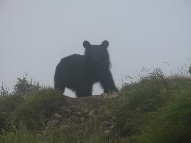 熊対策 に対する画像結果